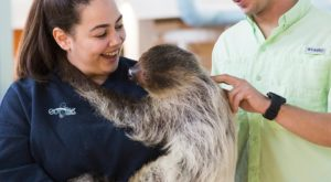 The One Place In Arizona Where You Can Have An Up Close Encounter With A Sloth