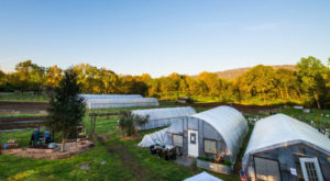 This Farm In Chattanooga Is The Perfect Place To Escape To The Tennessee Countryside