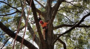 Practice Your Tree Climbing Technique At This Stunning Georgia State Park
