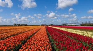 A Visit To Texas' Newest Tulip Farm Is The Best Thing You'll Do This Spring