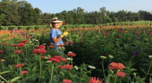 The Dreamy Flower And Berry Farm In Arkansas You'll Want To Visit This Spring