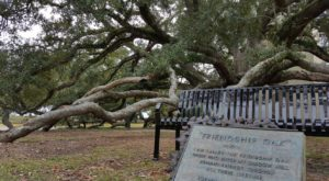 There's No Other Historical Landmark In Mississippi Quite Like This 500-Year-Old Tree