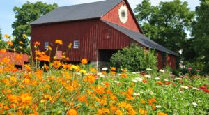 It Doesn't Get Much Better Than This Whimsical Pick-Your-Own Flower Garden In Virginia