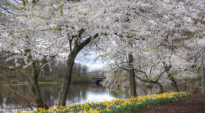 New Jersey's Cherry Blossom Festival Is The Most Beautiful Way To Celebrate Spring