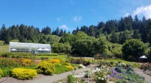 This Beautiful 45-Acre Botanical Garden In Northern California Is A Sight To Be Seen