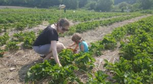 Take The Whole Family On A Day Trip To This Pick-Your-Own Strawberry Farm In Vermont