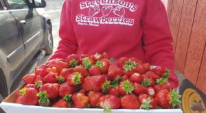 Take The Whole Family On A Day Trip To This Pick-Your-Own Strawberry Farm In Maine