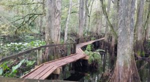 The Oldest Campground In Florida Has Made Summertime More Magical Since 1931