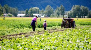 This 277 Acre U-Pick Vegetable Farm In Alaska Is The Perfect Way To Spend An Afternoon