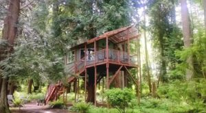 We Found 7 Spots To Sleep In The Trees In Washington This Summer