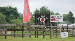 Take The Whole Family On A Day Trip To This Pick-Your-Own Strawberry Farm In Rhode Island