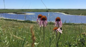 Visit This 14,000-Acre Wildlife Refuge In North Dakota To See Gorgeous Wildflowers