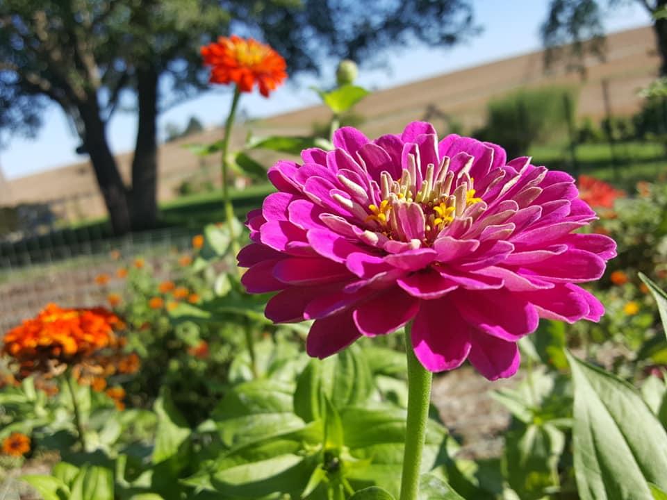 Tri cities flower farm