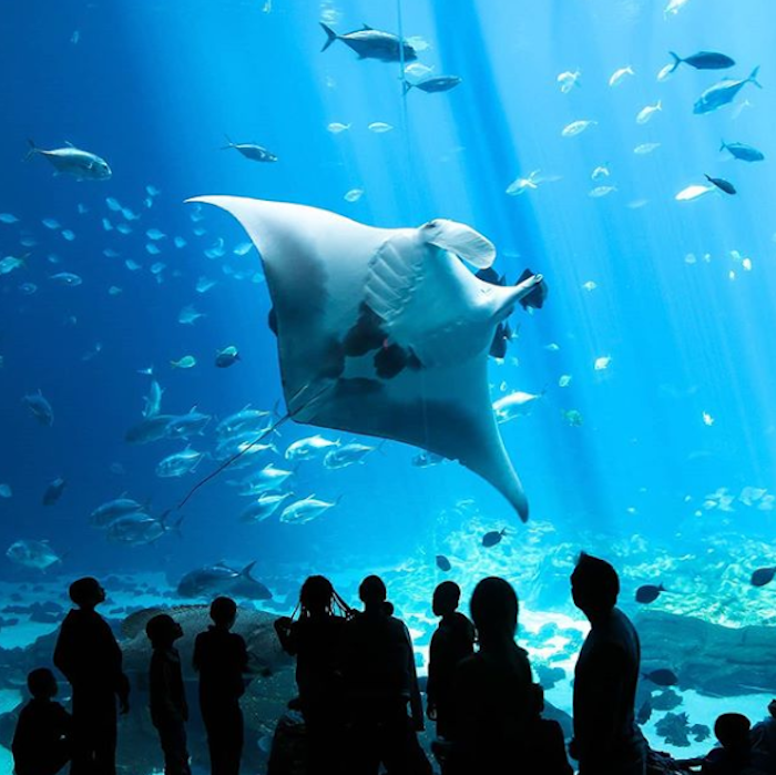 Georgia's Aquarium Is The Largest Of Its Kind In The World