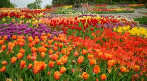 This Beautiful 1200-Acre Botanical Garden In Minnesota Is A Sight To Be Seen