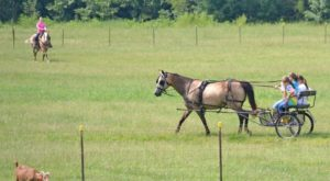 There's A Bed and Breakfast On This Horse Farm In Mississippi And You Simply Have To Visit