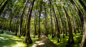 The Largest State Park In Louisiana Is A True Treasure You Have To See For Yourself
