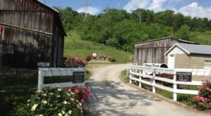 Enjoy Wine And Barbecue At This Gem Of A Vineyard Near Cincinnati