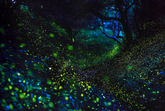 Here's Where And When To See Millions Of Fireflies Dance Across America This Spring