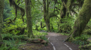The Most Magical Rainforest Hike In The U.S. Will Leave You In Awe