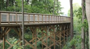 This Beautiful Boardwalk Trail In Indiana Leads To Three Tremendous Treehouses