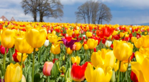 The 9 Places You Absolutely Must Visit In Oregon This Spring
