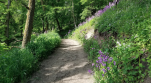 The Beautiful Oak Forest Trail In South Dakota You'll Want To Hike This Year
