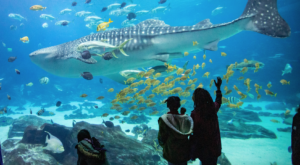 A Trip To The Largest Aquarium In The World Belongs On Your U.S. Bucket List