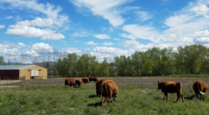 This Farm Walk In Idaho Is The Real Deal And Every Idahoan Should Do It At Least Once