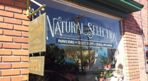 There's A Shop Of Curiosities In Nevada That Will Fill You With Strange Wonder