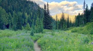 7 Peaceful Washington Trails You Might Have All To Yourself