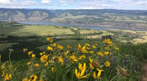 These Dazzling Wildflowers In Oregon Should Be On Your Spring Bucket List