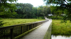 The One Easy Boardwalk Trail That Everyone In Virginia Should Take At Least Once