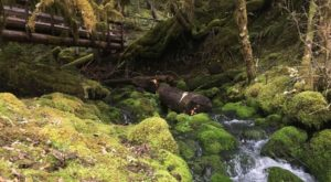 The Magical River Walk In Oregon That Will Transport You To Another World