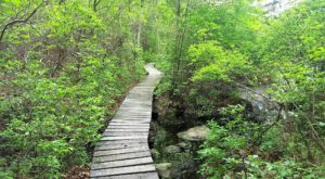 Visit Connecticut's Largest State Forest For An Outdoor Adventure Beyond Compare