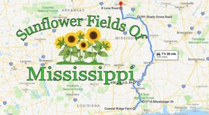 Take This Road Trip To The 5 Most Eye-Popping Sunflower Fields In Mississippi