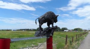 Hang Out With Bison At This One Of A Kind Farm Campground In Wyoming