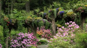 Alaska's Little Known Rainforest Garden Is Truly A Sight To See