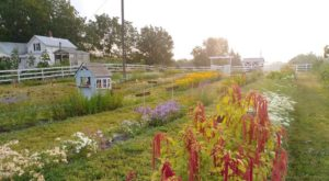 Visit This Flower Farm In Michigan For That Beautiful Scenic Experience You Crave