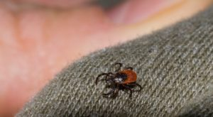 You Won't Be Happy To Hear That New Jersey Is Experiencing A Major Surge Of Ticks This Year