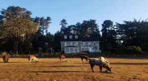 There's A Bed and Breakfast On This Llama Farm In Northern California And You Simply Have To Visit
