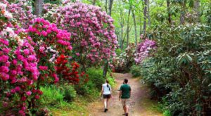 Wander Through Flowers As Tall As Trees At This Spectacular Spring Festival In Massachusetts