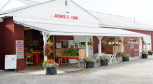 This One-Of-A-Kind Fruit Farm In Rhode Island Serves Up Fresh Homemade Pie To Die For