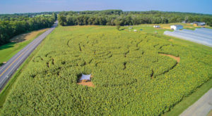 There's A Sunflower Maze In Maryland That's Just As Magnificent As It Sounds