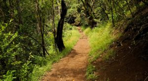 Escape Into The Forest On This Easy 2.5-Mile Trail In Hawaii