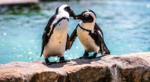 Play With Penguins At This Pennsylvania Zoo For An Absolutely Adorable Adventure