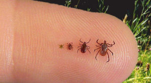 You Won't Be Happy To Hear That Oklahoma Is Experiencing A Major Surge Of Ticks This Year