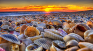 This Enchanting Stretch Of Peninsula In Florida Is A Sea Shell Lover's Paradise