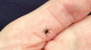 You Won't Be Happy To Hear That Kansas Is Experiencing A Major Surge Of Ticks This Year