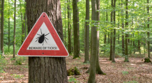 You Won't Be Happy To Hear That Colorado Is Experiencing A Major Surge Of Ticks This Year